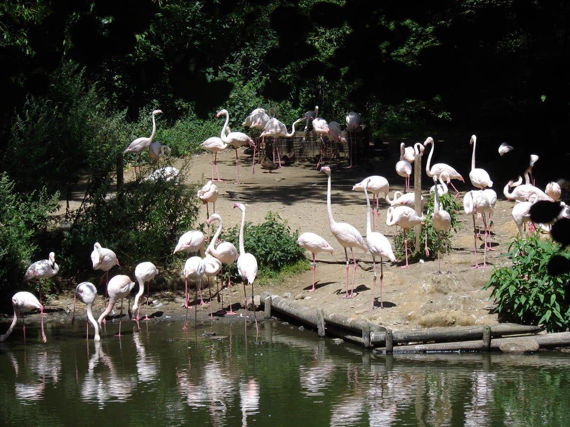 Visite du parc animalier peaugres imc71 for Parc a visiter